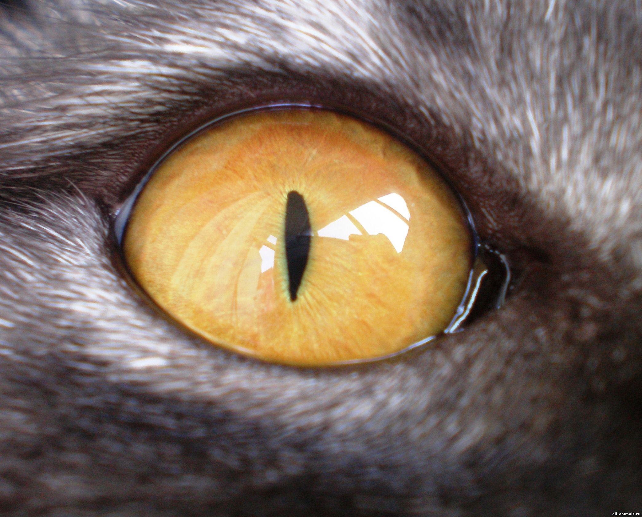 Как сделать глаза как у кошки макияж Визаж и здоровье глаз 89